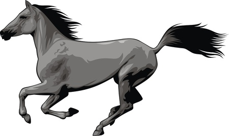 illustrated nice horse isolated on white background Vector