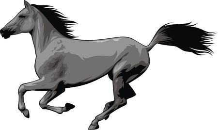 carreras de caballos: ilustrado bonito caballo aislado en el fondo blanco