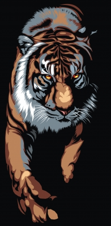 nice big tiger on the black background Vector
