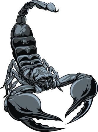 scorpion: illustr� beau scorpion isol� sur fond blanc Illustration
