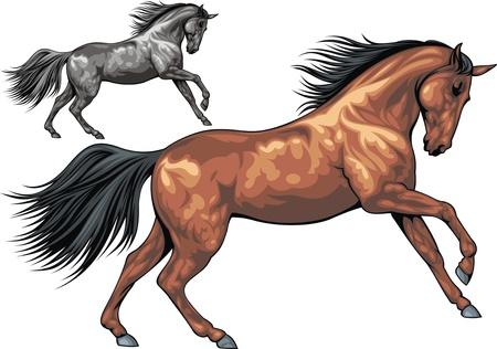 galop: illustr� beau cheval isol� sur fond blanc