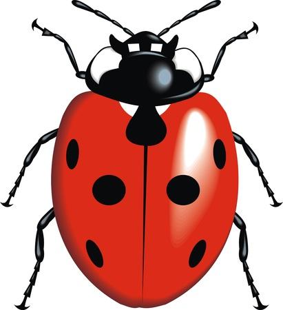nice lady bug isolated on white background Vector
