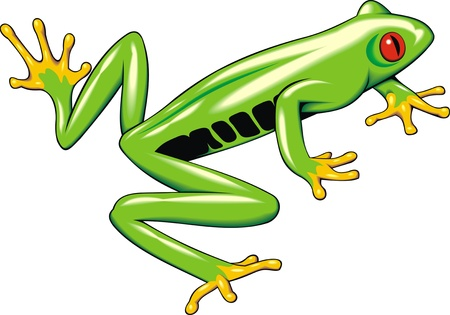 nice tree frog isolated on white background Stock Vector - 20104647