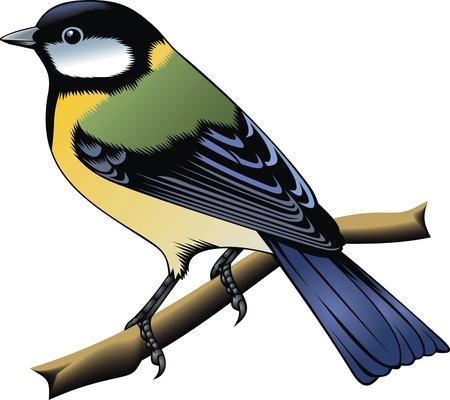 rúdon ülés: Szép színes madár elszigetelt fehér háttér