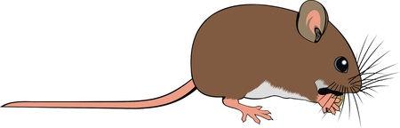 nice small mouse isolated on white background Stock Vector - 20104458