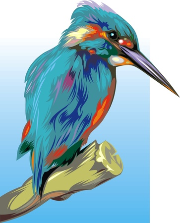 nice illustrated kingfisher on the blue and white background