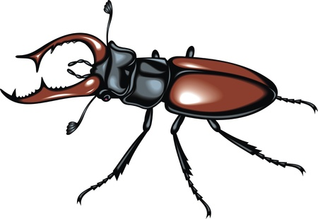 nice stag beetle isolated on white background Stock Vector - 20778257