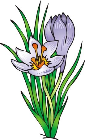 flor aislada: ilustrada bonita flor violeta aislados sobre fondo blanco