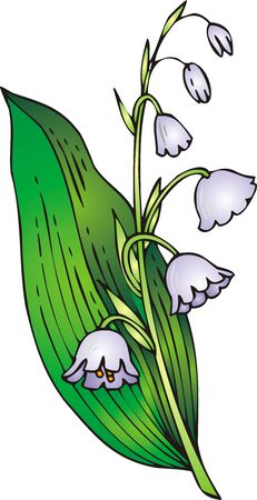 white lilly: illustrated nice lilly of valley isolated on white background