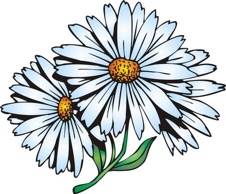 flor aislada: flor bonita ilustrado aislado en fondo blanco