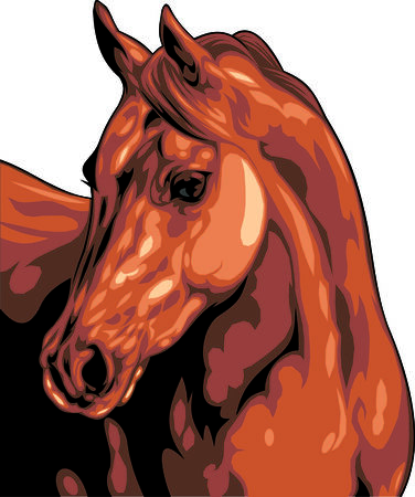 brown horse: head of brown horse isolated on the white background Illustration