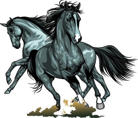 chevaux sauvages isolés sur le fond blanc