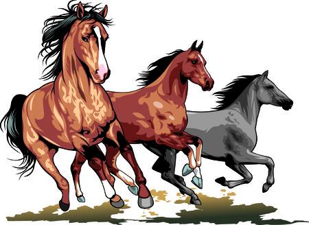 wild horses isolated on the white background Illustration