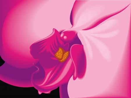 érdekes: illusztrált szép orchidea érdekes makro háttér