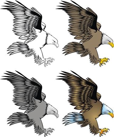 illustrated nice eagle isolated on white background Illustration