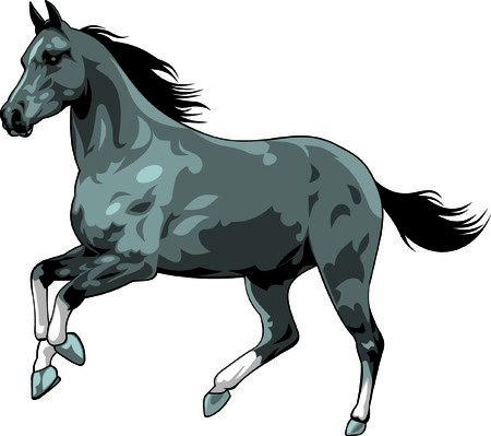 black horse isolated on the white background Vector