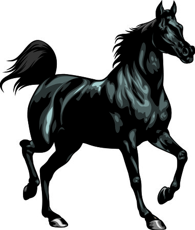 black horse isolated on the white background Illustration