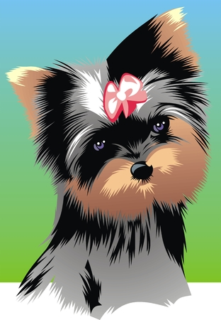 terriers: illustrated nice yorkie on the colored background