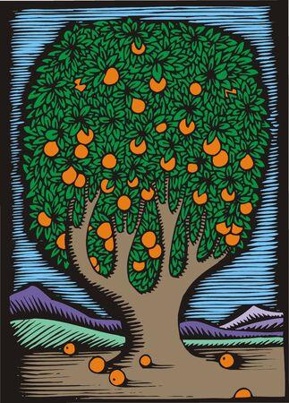 orange tree: illustrated orange tree as interesting natural background Illustration