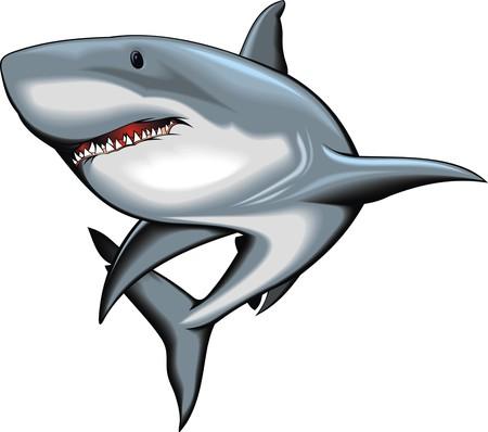 nice shark isolated on the white background