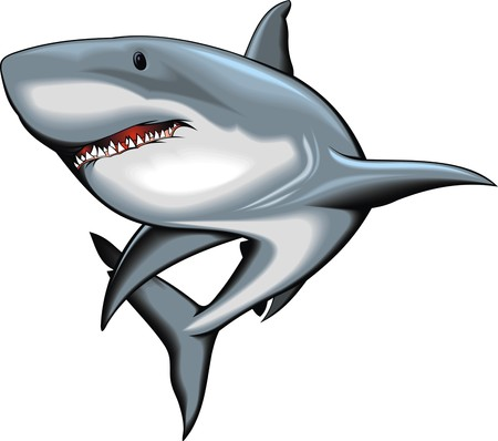 sharks: nice shark isolated on the white background