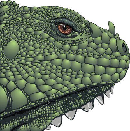 cabeza de dragon: bonita cabeza de drag�n aislado en el fondo blanco Vectores