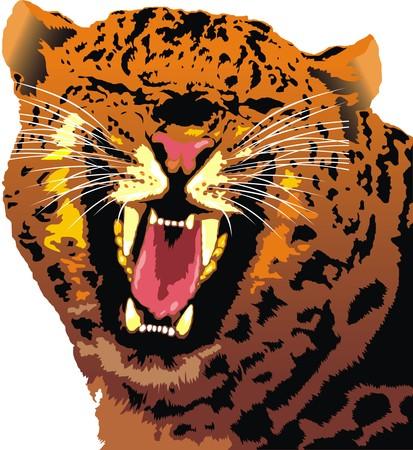 tigresa: cabeza de gato salvaje aislado en fondo blanco Vectores