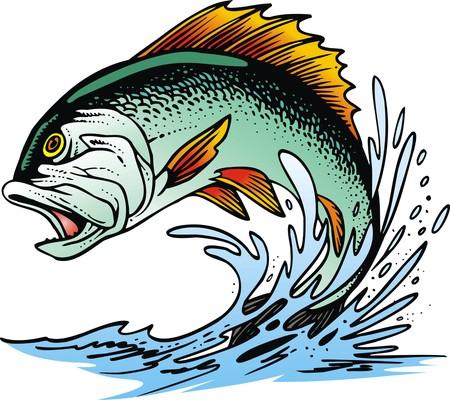 흰색 배경에 고립 blackback 물고기 일러스트