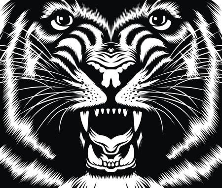 tigresa: cabeza de gato salvaje tan bonito fondo blanco y negro Vectores