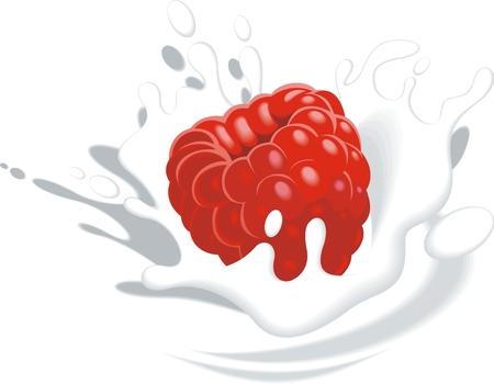plunge: raspberry in yogurt or milk as fruit background