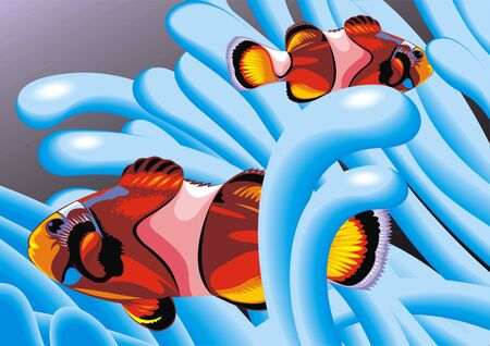 nemo: two clown fishes on the blue background