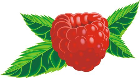 macro nature: fresh red raspberry isolated on the white background