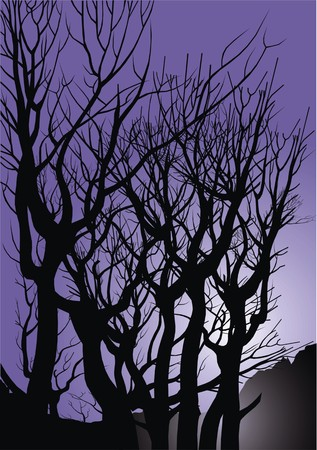 front or back yard: old trees in the violet night as natural background