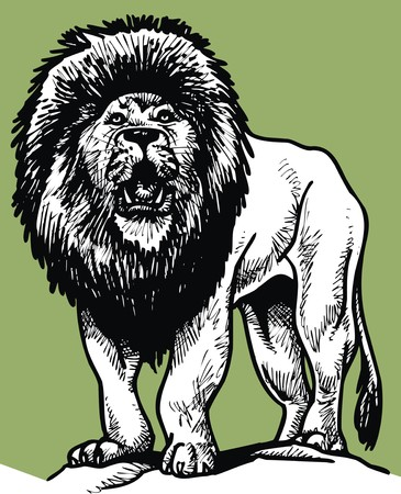 collegiate: wild lion isolated on the white background Illustration