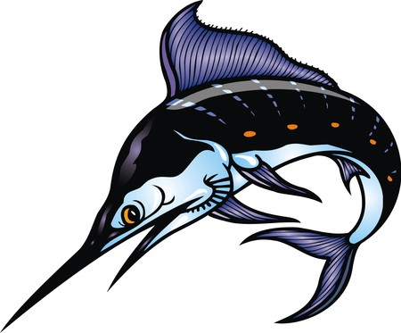 marlin: marlin fish isolated on the white background