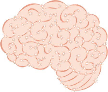 lobes: human brain isolated on the white background