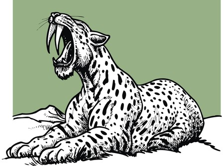saber tooth: saber toothed tiger - prehistoric animal isolated on the white background