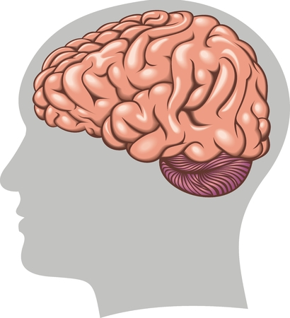 main idea: human brain isolated on the white background