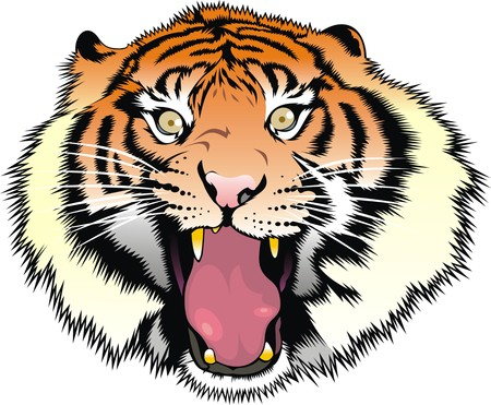 tigress: tiger head isolated on the white background