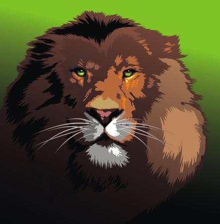 collegiate: wild lion head as symbol of king animal