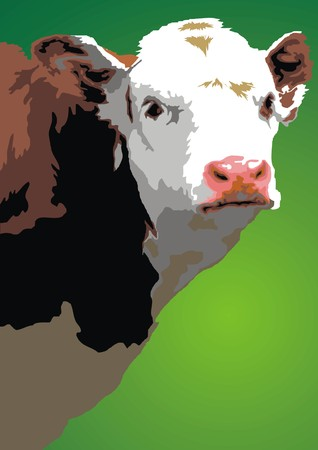young cow: young cow head isolated on the white background Illustration