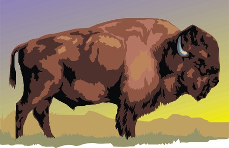 fauna: wild bison animal as symbol of big fauna