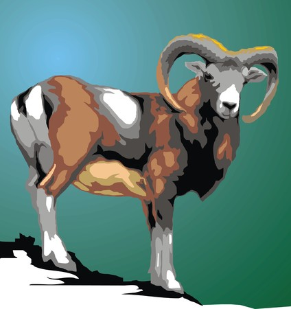 bighorn: wild mouflon animal isolated on the green background Illustration