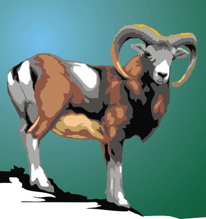 european alps: wild mouflon animal isolated on the green background Illustration