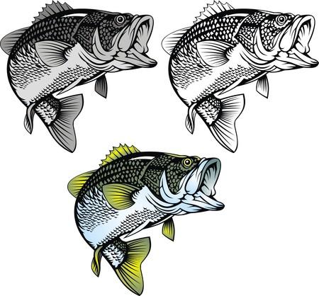 bass vis geïsoleerd op de witte achtergrond