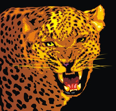 wild jaguar cat, detail of animal head