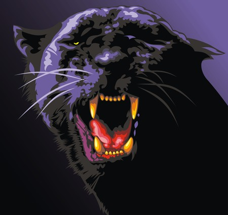 panthera: big black cat in the dark night