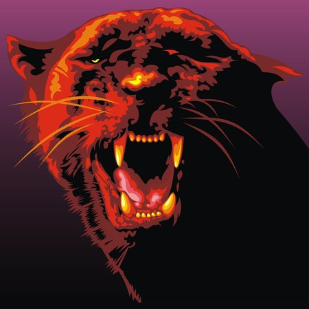 panthera: big dark cat as very nice animal background