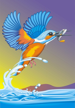 kingfisher bird on the river as nice illustration