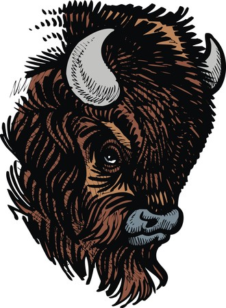 head of bull isolated on the white background